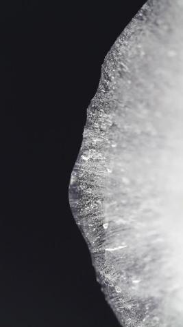 δάχτυλο γαμημένο μεγάλο μαύρο πουλί